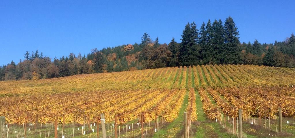 Ankeny Vineyards