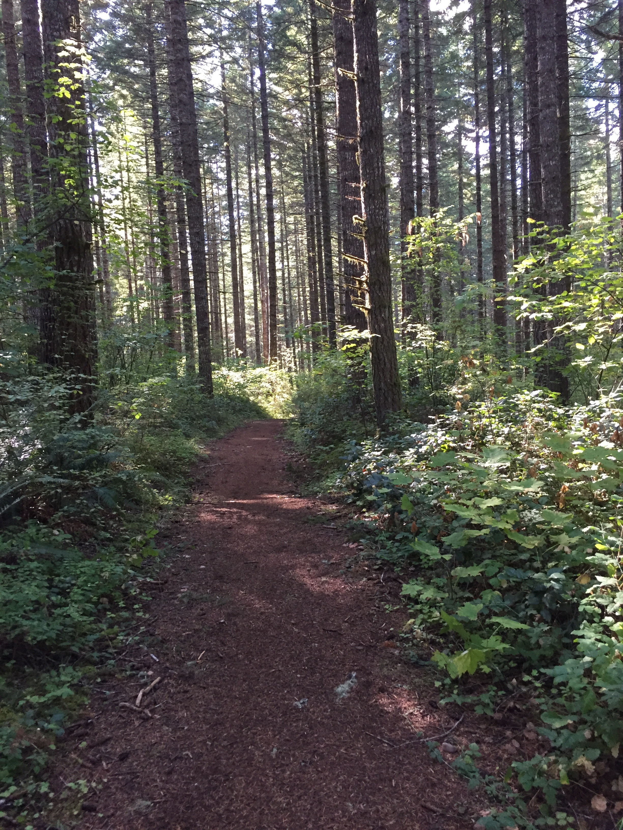 Nice trail in the woods