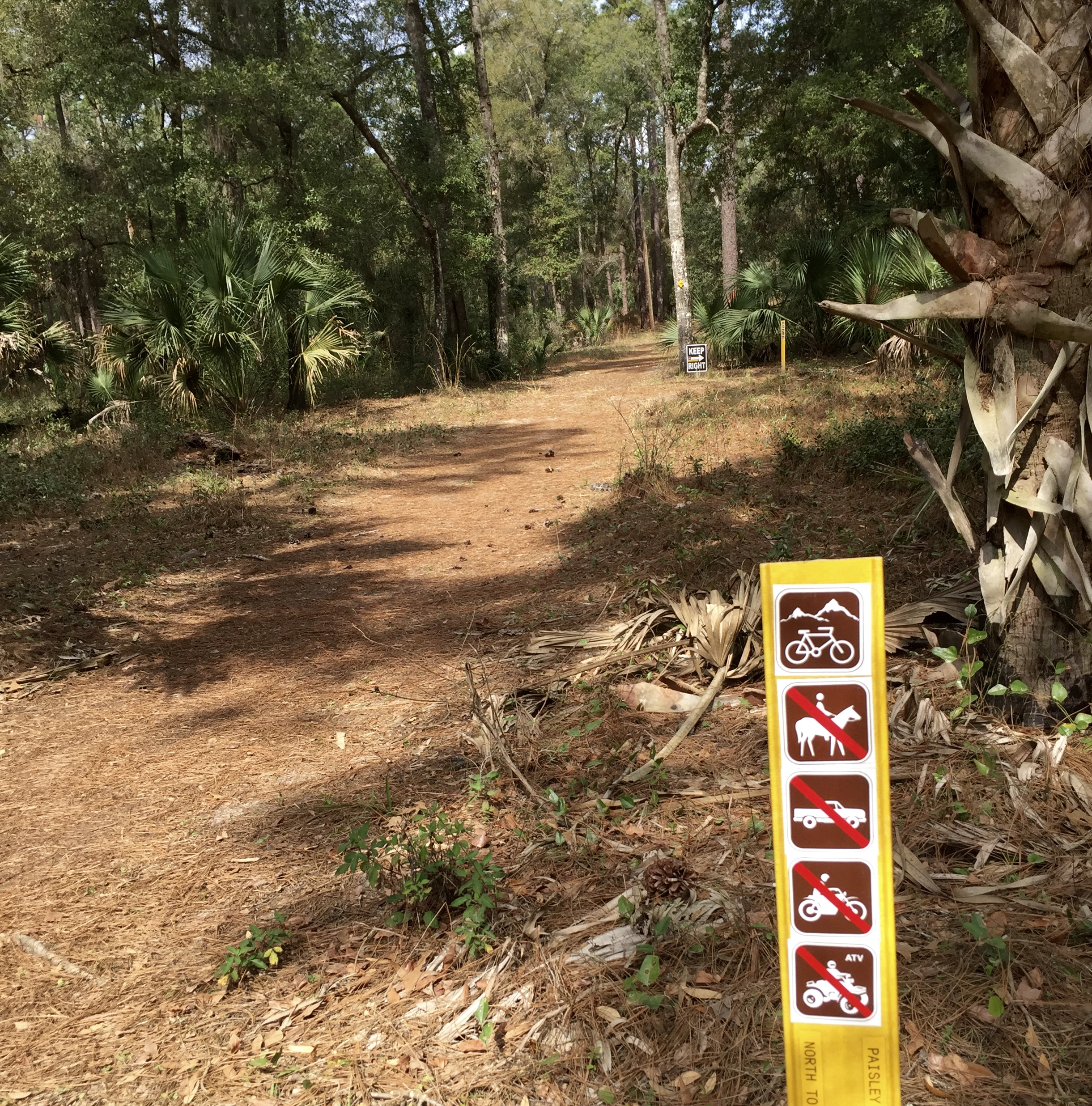 Mountain bike trail in Ocala National Forest.