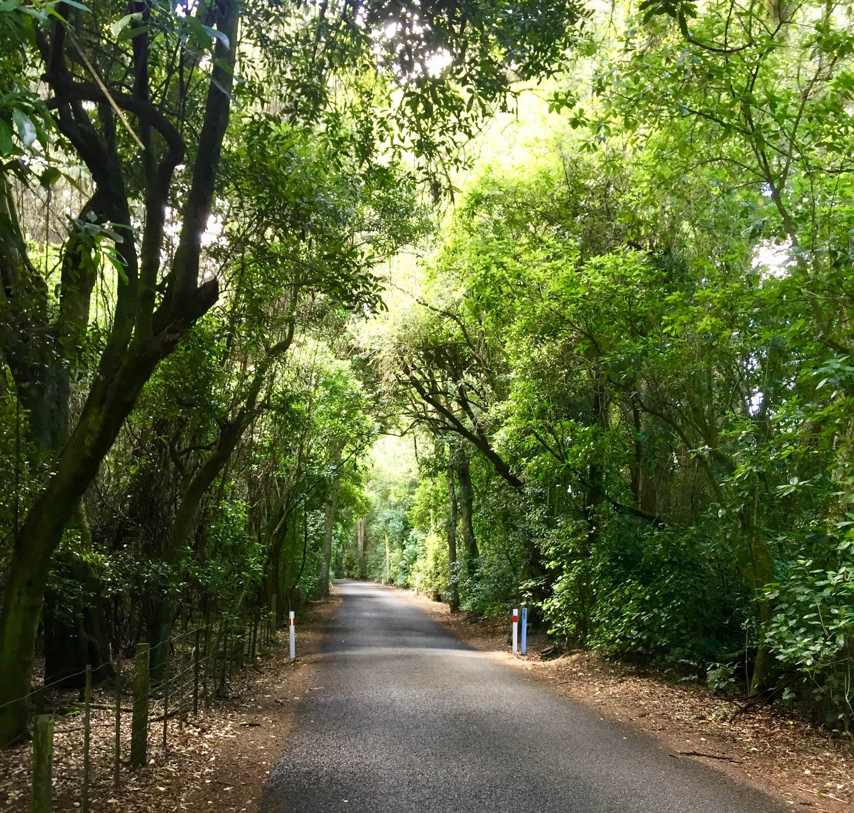 Nice treelined road