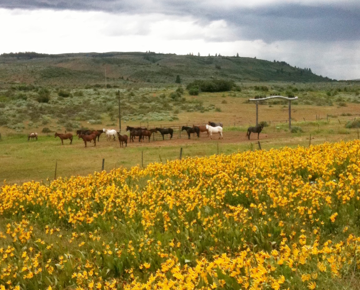 Sunflowers and horses