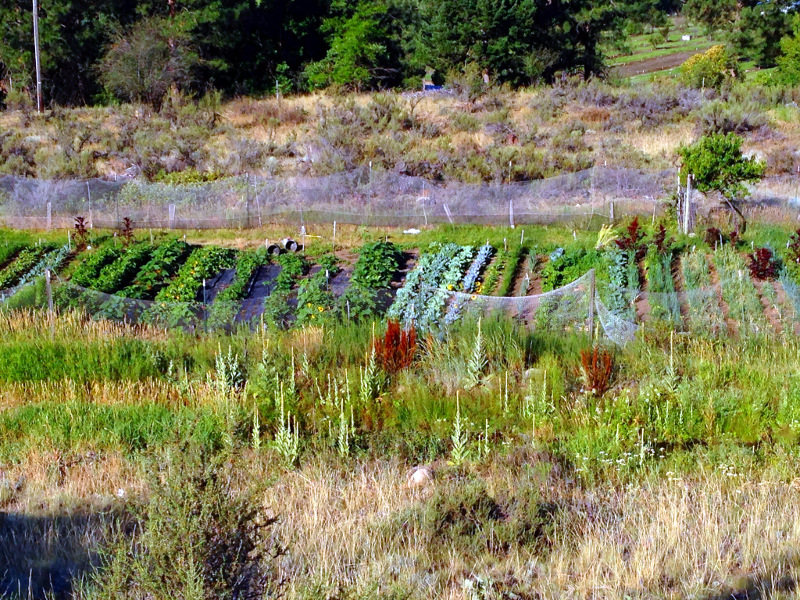 I saw this great garden on the road to Twisp. Like a lot of desert areas if you have water things really grow.