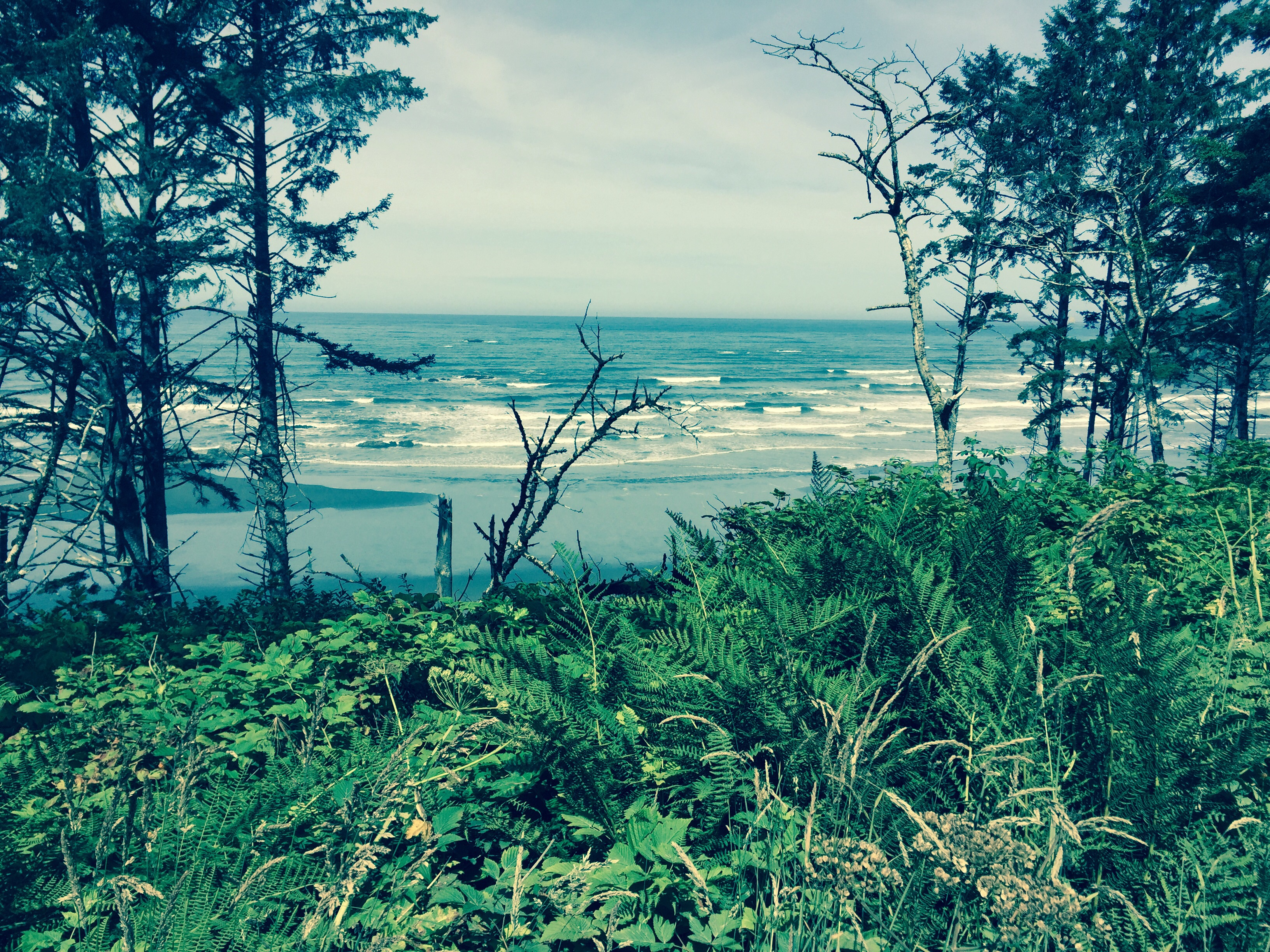 The Washington coast.