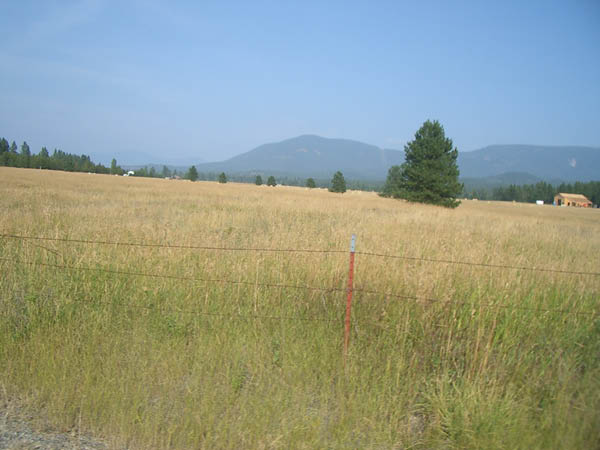 Grassland north of Coeur d'Alene