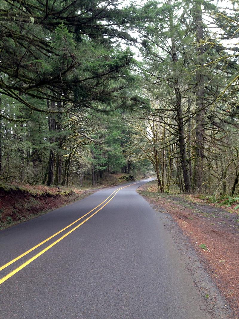 Quiet road through the woods