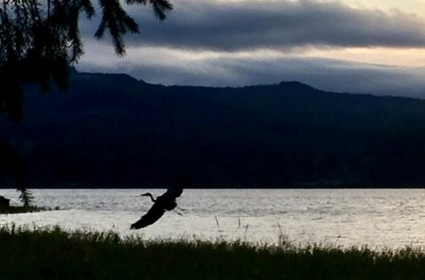 Lucky shot of a heron