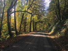 Woods Creek Road