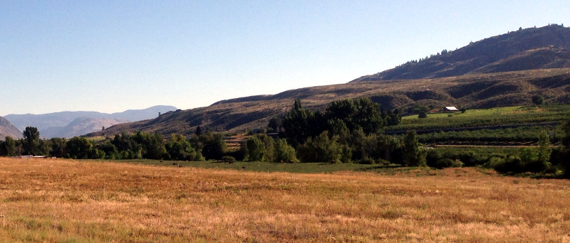 On the way to Tonasket there were orcahrds tucked into the hills along the Okanogan River.